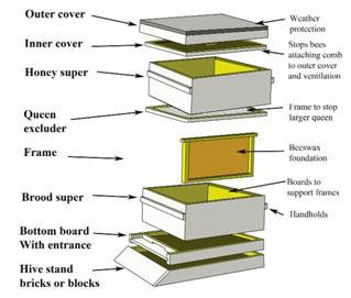 Anatomy of the hive Hive natural layout tree bee nest wild A wasps nest in  a tree (US)– not a honey bee The honey bee would make its nest in a hollow  tree. Dissection of the hive demonstrates the relative position of the honey,  pollen and brood-nest. The ...